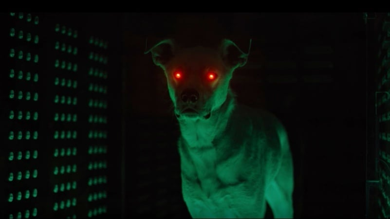 Superboy Joshua Orpin Shares A Glimpse Of Krypto From 'Titans' Season 2