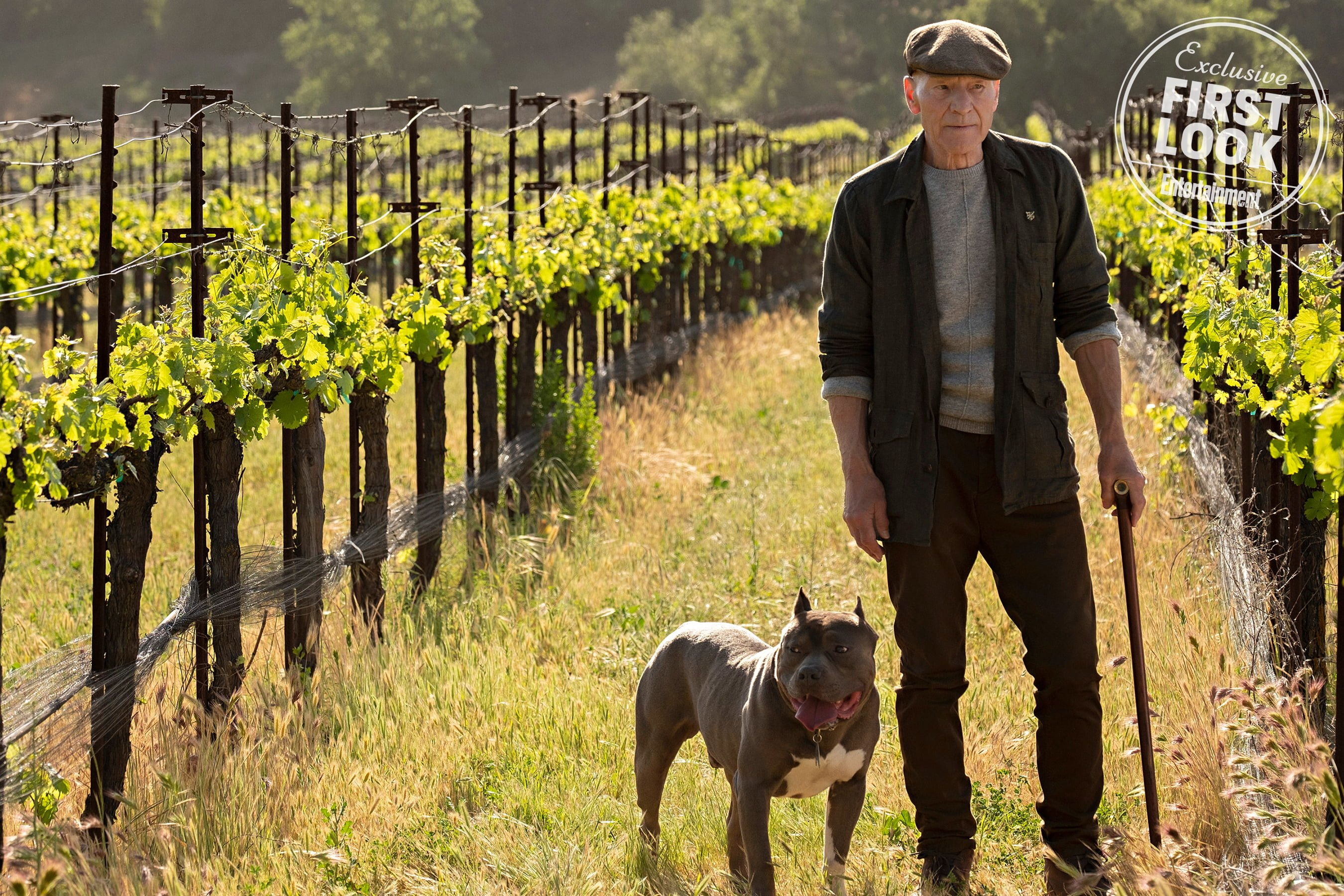 The Latest 'Star Trek: Picard' Teaser Introduces His New Number One